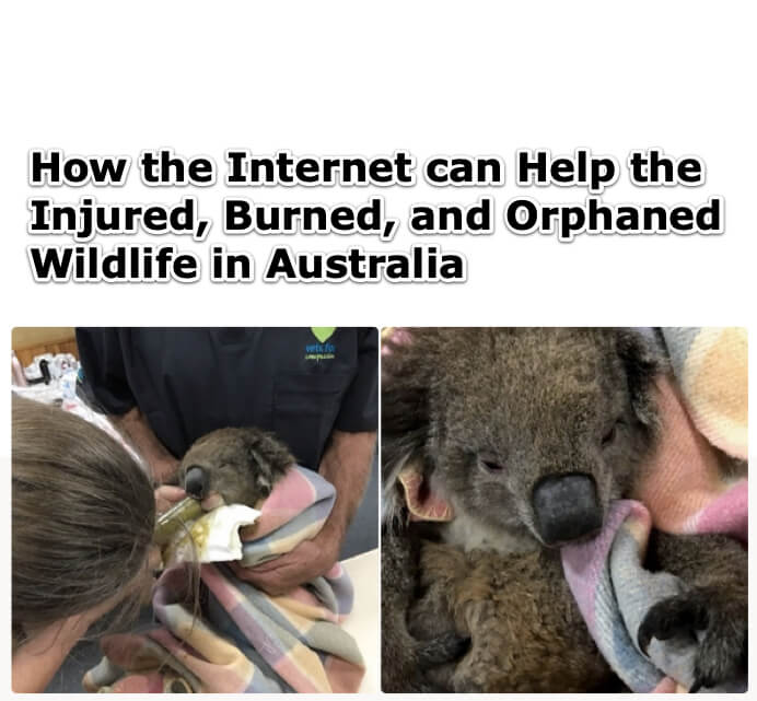 How the Internet can Help the Injured, Burned, and Orphaned Wildlife in Australia
