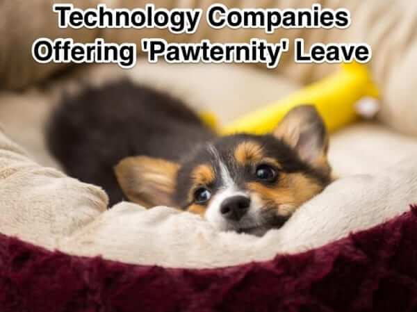 Tech Companies Now Offering 'Pawternity' or 'Peternity' Leave