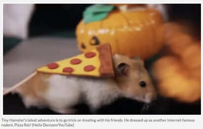tiny hamster dressed as pizza rat