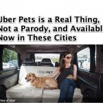 UberPET for Uber Pets is a Real Thing Not a Parody – Available Now in These Cities!